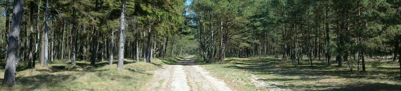 leśna nadmorska droga w Wiciu