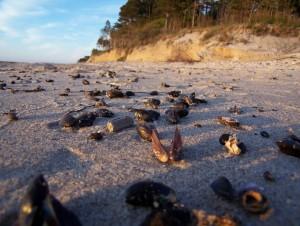 plaża i muszelki