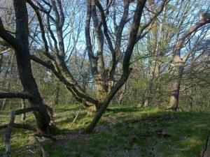 drzewa i piaskowy wał
